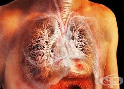 Как да изчистим белите си дробове от цигарите? - изображение