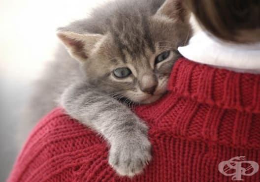 Как да намерите котка, която съвпада с вашите личност и начин на живот - изображение