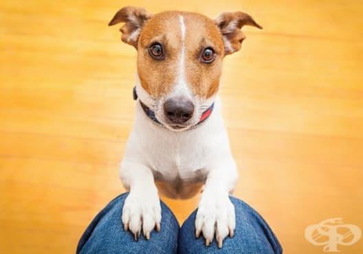 Как да намерите куче, което съвпада с вашите личност и начин на живот - изображение