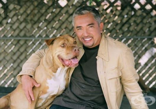 Как да обучите вашето куче като професионалист? - изображение