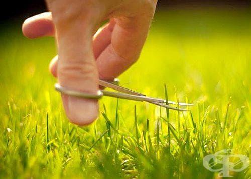 Как да поддържаме свежи и красиви тревните зелени площи? - изображение