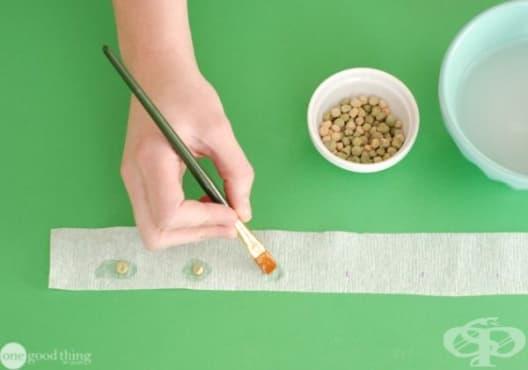 Как да подготвим семената за лесно пролетно засаждане? - изображение