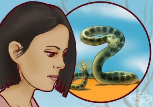 Как да разпознаем дали една змия е отровна? - изображение