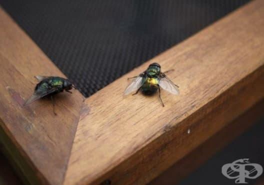 Как да си направите австралийски капан за мухи - изображение