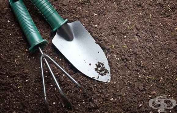 Как да тестваме нивото на pH в почвата с помощта на червено зеле? - изображение