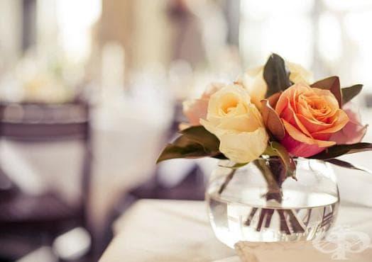 Как да удължим живота на розата с помощта на магданоз? - изображение