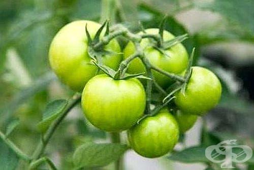 Как да ускорим зреенето на доматите? - изображение