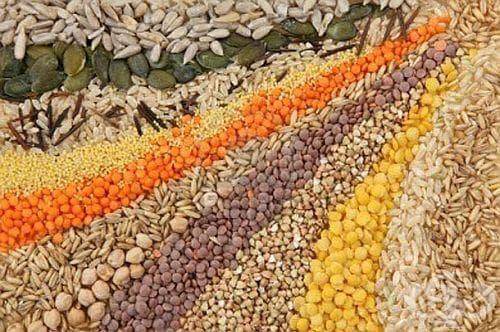 Какви семена трябва винаги да присъстват на трапезата ни? (1 част) - изображение