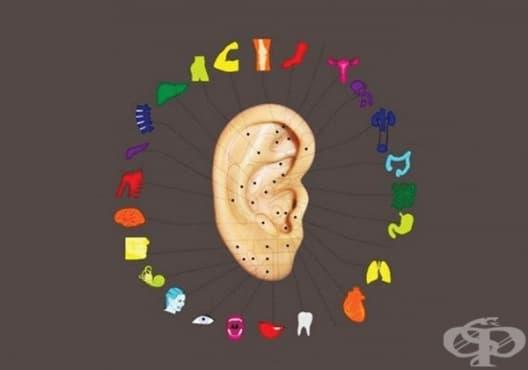 Какво разкриват ушите за вас? - изображение