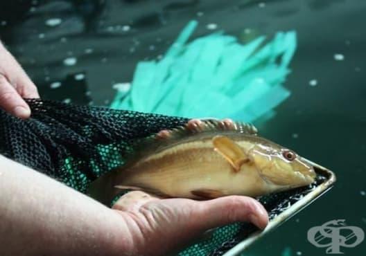 Какъв вид риба трябва да ядете: 8 съвета за избор на здравословен продукт - изображение