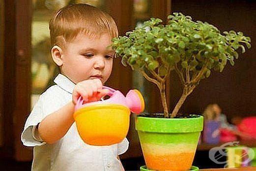 Кои цветя да сложим в детската стая и кои задължително да махнем от там? - изображение