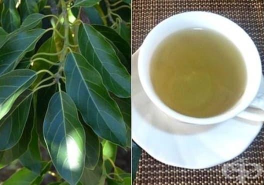 Консумирайте чай от листа на авокадо против камъни в жлъчката - изображение