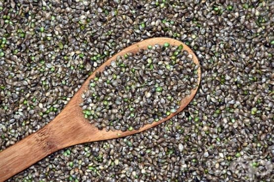 Подобрете тонуса и сърдечното здраве с конопено семе - изображение