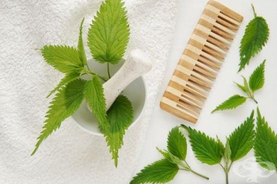 Използвайте коприва за предотвратяване на косопада и заздравяване на косата - изображение