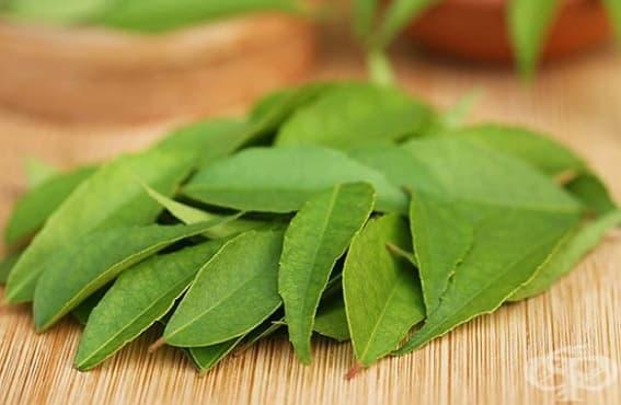 Отстранете пърхота и косопада с листа от къри и хибискус - изображение