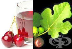 Лекувайте със смокинови листа или вишневи дръжки камъни в бъбреците - изображение
