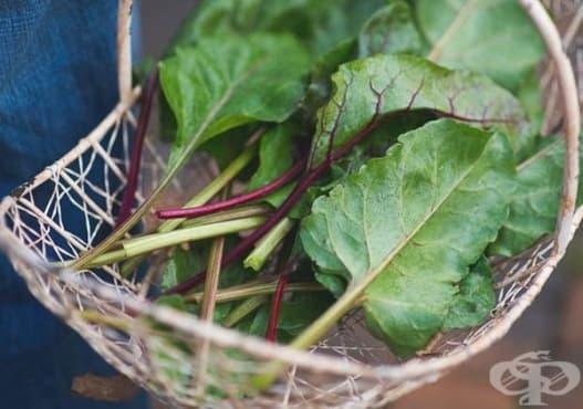 Подобрете храносмилането с листа от червено цвекло - изображение