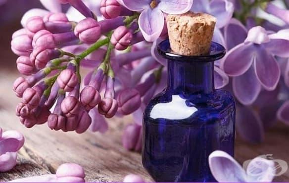 Облекчете стреса и безпокойството с етеричното масло от люляк   - изображение