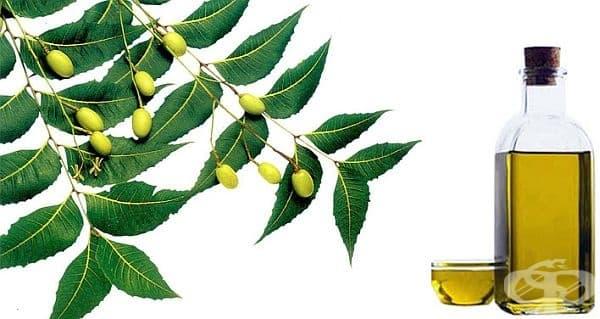 Използвайте масло от нийм против ухапване от насекоми - изображение