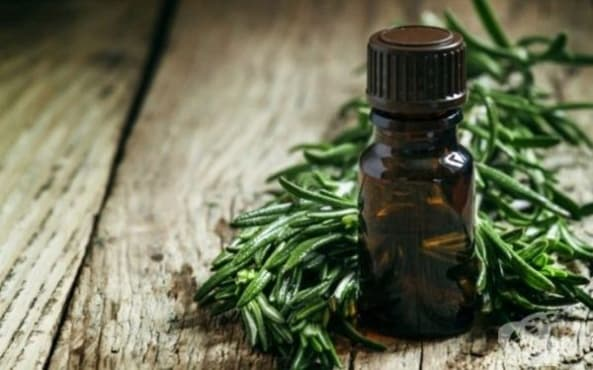 Премахнете черните точки по ушите с масло от чаено дърво  - изображение