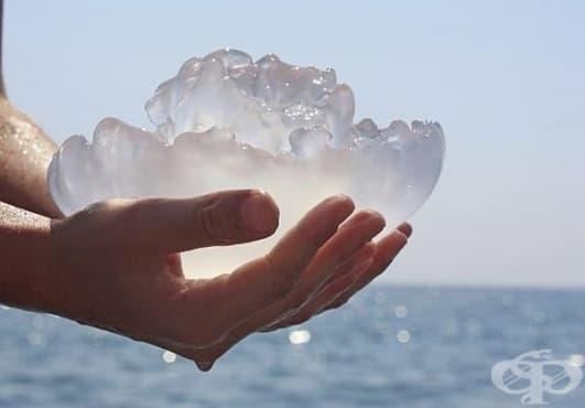 При ужилване от медуза използвайте сода, сол и вода - изображение