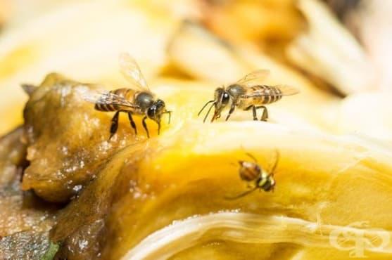 Направете си капан за плодови мушици от портокалов сок - изображение