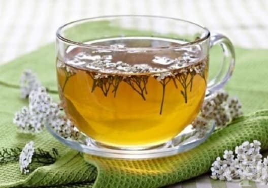 Намалете високата температура с чай от бял равнец - изображение