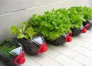 Направете си саксии за цветя и зеленчуци от ненужни пластмасови бутилки - изображение