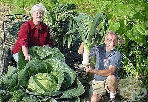 Направете си сами евтин домашен тор и стимулатор на растеж за зеленчуците - изображение