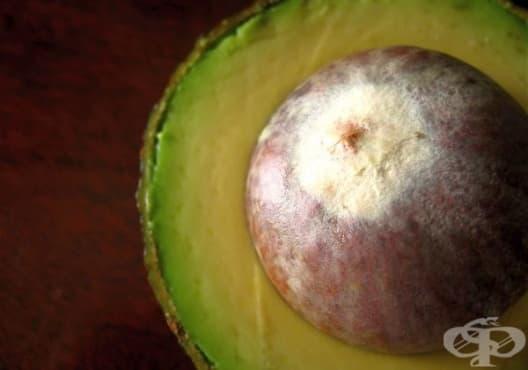 Направете си екологично мастило от семена на авокадо - изображение