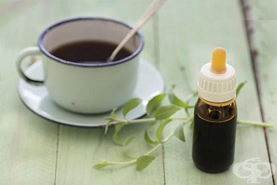 Направете си естествен подсладител за храни и напитки от стевия - изображение