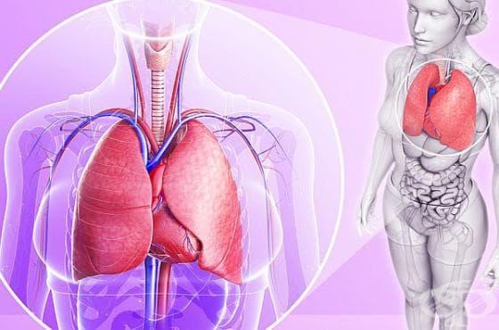 Направете си сироп за пречистване на дробовете от чесън, куркума и джинджифил - изображение