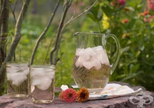 Насърчете имунитета със студен чай от слез, тулси и шизандра - изображение