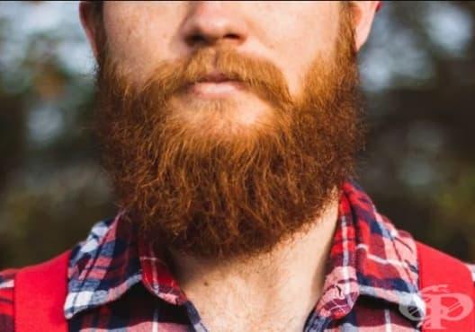 Насърчете растежа на брадата с арган, кокос и слънчоглед - изображение