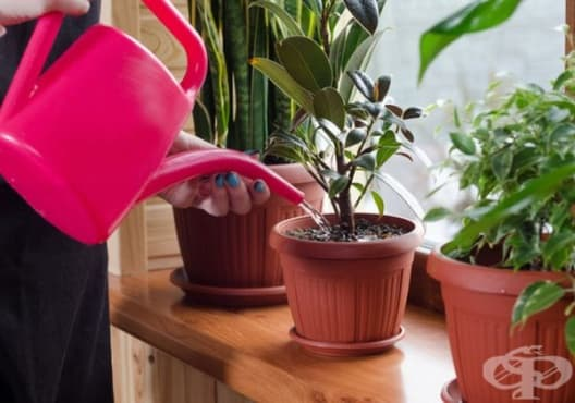 Насърчете растежа на цветята с разтвор от мая и захар - изображение