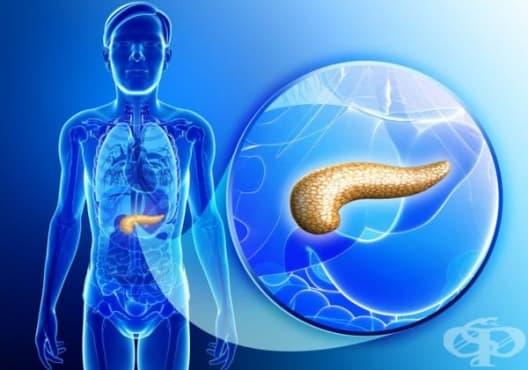 Насърчете здравето на панкреаса с 8 вида храни - изображение