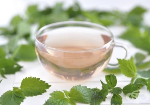 Намалете болките в бъбреците с чай от коприва - изображение