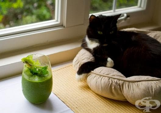 Облекчете диабета с напитка от киви, банан, ябълка и зеле - изображение
