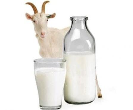 Облекчете напълно гастрит, киселини и язва с козе мляко - изображение
