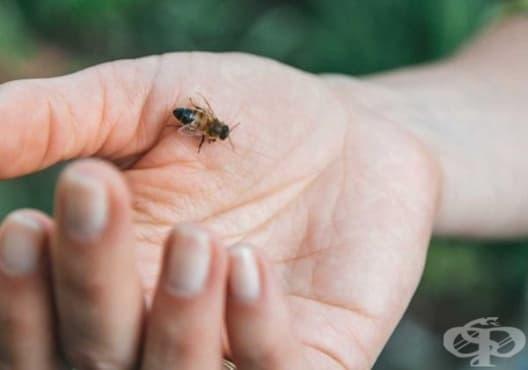 Облекчете ужилването от насекомо чрез 5 лесни начина - изображение