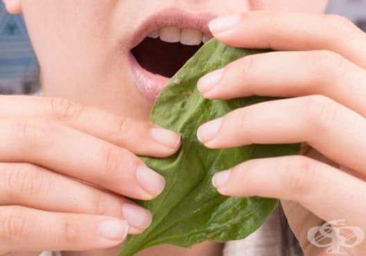 Облекчете зъбобола с листа от живовляк - изображение