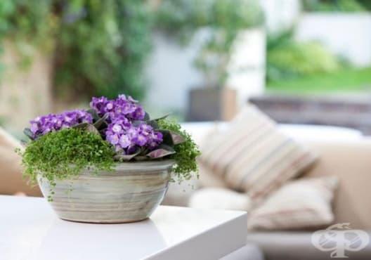 Отглеждайте 15 от най-добрите стайни растения за дома - изображение