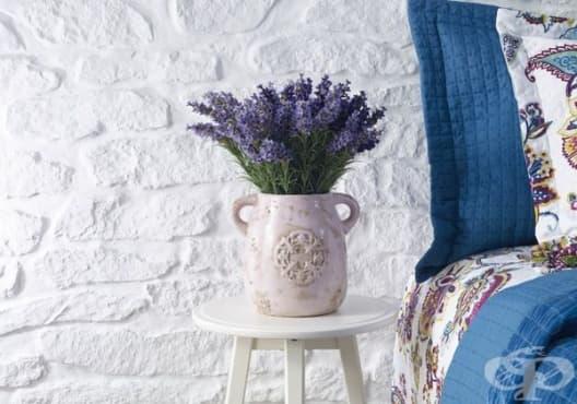 Отглеждайте 4 стайни растения, за да облекчите апнеята и безсънието - изображение