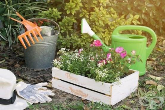 Открийте 4 ползи на содата за растенията в градината - изображение