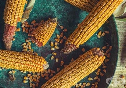 Открийте разликата между ГМО и органичната храна с помощта на тези 3 начина - изображение