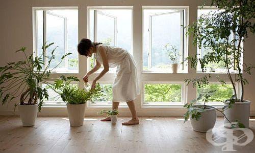 Открийте тайните за отглеждането на красиви и здрави растения - изображение