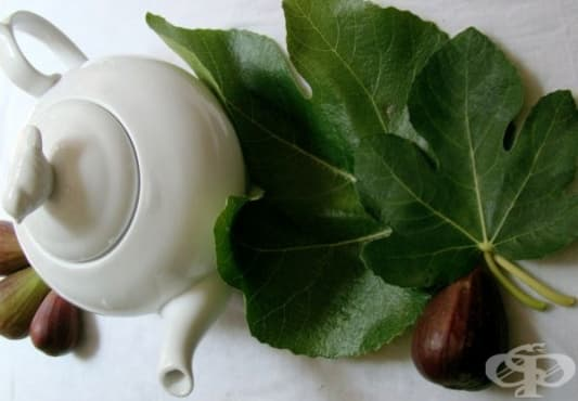 Облекчете симптомите на бронхит с отвара от смокинови листа - изображение