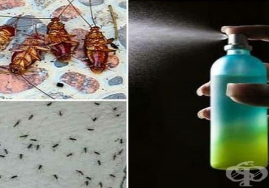 Отървете се от досадните насекоми със спрей от оцет, зехтин и шампоан - изображение