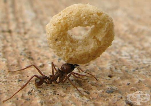 Отървете се от насекомите у дома с тези 3 безопасни начина - изображение