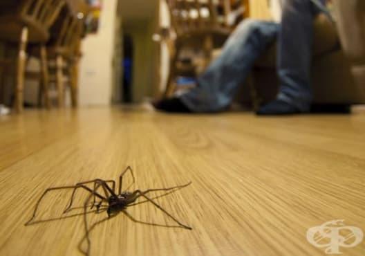 Отървете се от паяците чрез 10 естествени начина - изображение
